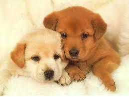 puppies wallpaper
