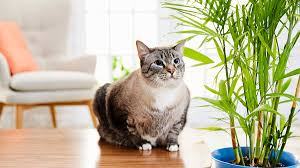 Ingestion of these plants may cause minor illnesses such as vomiting or diarrhea. 5 Air Purifying Plants That Are Safe For Pets And Several To Avoid
