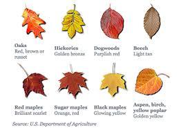 Fall Leaf Chart Fall Leaf Color Chart Autumn Leaf Color Leaf Coloring