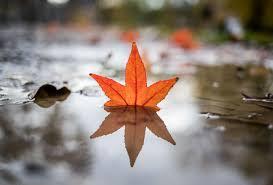 Autumn scenes - The Boston Globe