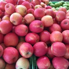 apple. apple