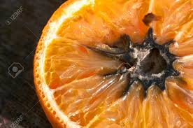 Resultado de imagem para laranja podre