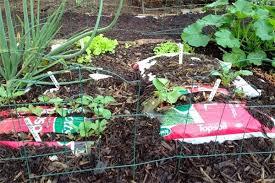 best soil for vegetable garden. best soil for vegetable garden gardening vegetables amend b