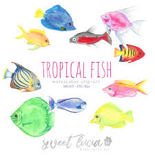 3000x3000 watercolor clip art tropical fish set fish aquarium