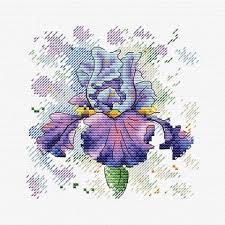Lush Iris