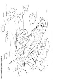 Small Picture Catfish free coloring pages
