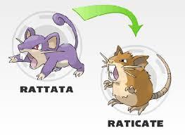 Rattata Evolution Chart Pokemon Life