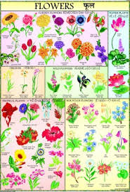 Flowers Chart For Children Paper Print 40 Inch X 28 Inch Rolled