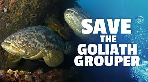 Petition Florida Conservation And Wildlife Fish The Commission · 6aYqr6