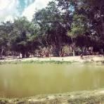 imagem de Boninal Bahia n-6