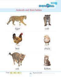 Kindergarten Science Animals And Their Babies Preschool