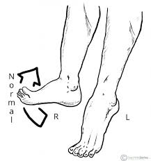 Nerve Chart Leg The Common Fibular Nerve Course Motor Sensory