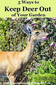 how to keep deer out of my vegetable garden keep deer out of your garden or