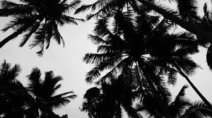 Beautiful Palm Trees Tumblr Love W On Decor