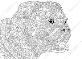 Small Picture Bulldog Boxer Dog Coloring Page Adult by ColoringPageExpress