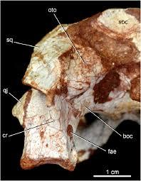 caipirchus mineirus cpplip 1463