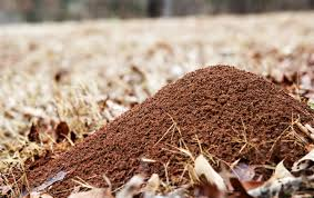 how to get rid of ant hills the