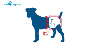 Dog Diaper Size Chart How To Put On A Dog Diaper And Choose The Right Size