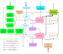 Flow Chart Of The Calcium Dynamics Model Download