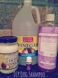 4 coconut oil dog shampoo