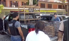 Resultado de imagem para Mossoró: Ibama deve receber animais silvestres apreendidos