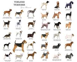 All Dog Breeds Chart Chart Of Terriers Terrier Dogs