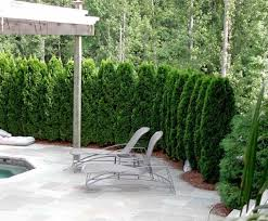 interior plants for patio privacy ideas classic rustic 8 patio privacy plants
