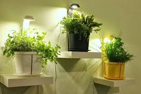 Small Picture Kitchen Garden Designs for Modern Age BlogNurserylivecom