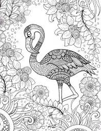 Bird Coloring Pages For Adults Scbu Free Printable Adult Coloring