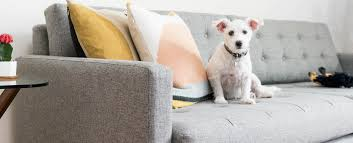 Dog friendly furniture Leather Couch Tips For Choosing Petfriendly Furniture Joybird Tips For Choosing Petfriendly Furniture Joybird