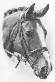 horses drawings. Modren Horses Contact  For Horses Drawings R