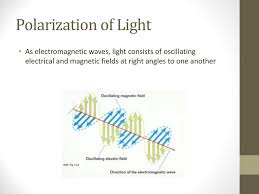 Polarization Of Light Physics Ppt Light And Reflection Holt Physics Ppt Download