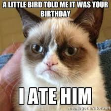 grumpy cat birthday bird. Exellent Cat Grumpy Cat  A Little Bird Told Me It Was Your Birthday I Ate Him Inside Birthday Bird I