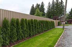Types Hedge Plant to Fence Home