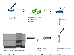 Tissue Culture Flow Chart Figure 1 From Flow Cytometry Applied In Tissue Culture