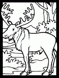 Small Picture Porcupine Animals Coloring Pages Coloring Book