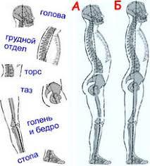 Осанка Википедия Сегменты тела и скелетный баланс