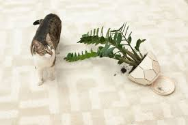 toxic houseplants what you need to know to keep your pets safe