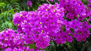 Resultado de imagen de fotos gratis de flores color violeta