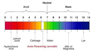 Cannabis Ph Chart Ph And Ppm Levels For Growing Marijuana The Complete Guide