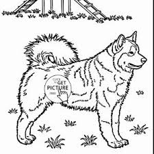 Zuma Coloring Pages New Paw Patrol Rocky Skye And Page Free