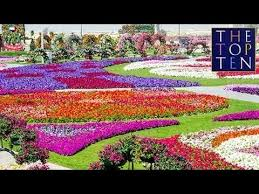 Small Picture HD Beautiful Tulip Flower Fields and Gardens Colorful Flowers