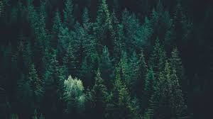Forest Laptop Wallpapers on WallpaperDog