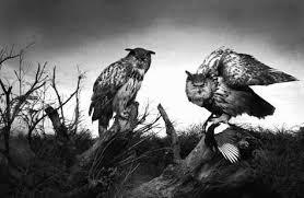 フクロウ かっこいい イラストの画像検索結果 ストリクス フクロウ