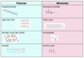 Role And Importance Of Monomers And Polymers Expii