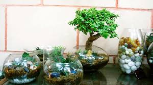 Small Picture ozziesterrariums Your personalized little gardens in glass