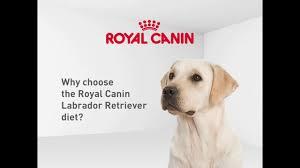 <b>Royal Canin</b>: <b>Labrador Retriever</b> Diet Dog Food – Australia - YouTube