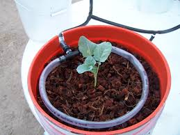 plant growing in the drip system