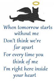 Loss Of A Cat Quotes Cool Cat Condolence Poems Death Poems Pet Loss Sympathyo Inspirations