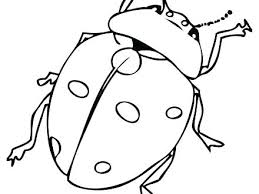 Lady Bug Coloring Sheet Lady Bug Color Page Dolphinimmigration Co